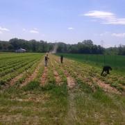 Schorn Erdbeeren Vorbereitung 2015